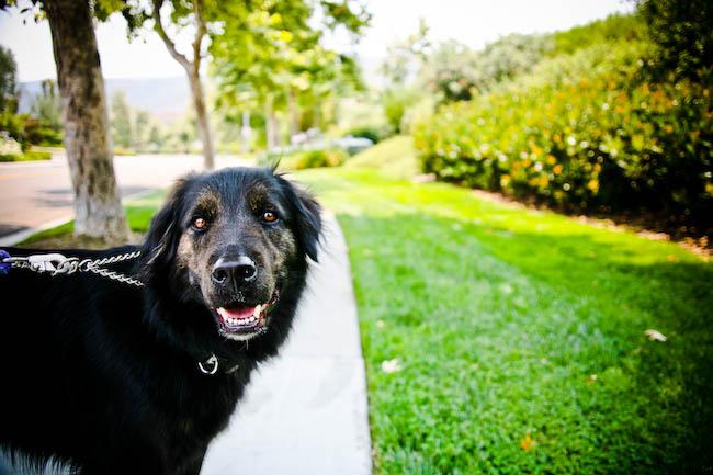 dog walk4
