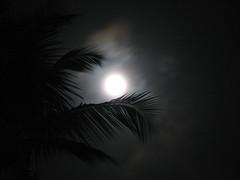 Caribbean night 2 (Mihnea Stanciu) Tags: republica wallpaper vacation moon leaves night island dominican dominicanrepublic palm palmtrees palmtree punta tropical caribbean puntacana republicadominicana riu riuhotel riutaino caribbeannight