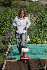 IMG_2965 (David Goose / MSI) Tags: david vegetables garden mantis gardening goose machines allotment cultivator tiller powertool dgp esystem rotavator mantistiller laveryrowe davidgoose