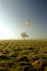 Hot air balloon (Powerhouse Museum) Tags: travel sky mist hot tree grass rural landscape flying air transport balloon floating victoria powerhousemuseum