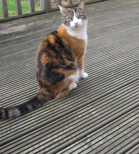 Stripey Cat on Stripey Deck