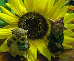 Due matti sui pittilli (alfiererosso) Tags: friends pixy amigos cute funny flor objects sunflower owl amici freunde girasole oggetti girasol duende sonnenblume objectos folletto gufo objecten fogu gufetta vuho fairycreatures vuhita