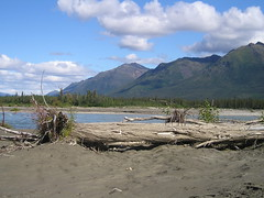 Driftwood along the Middle Fork Koyukuk River