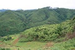 IMG_8259 (davidlandes) Tags: trekking laos 2008 phongsali muangkhua 200807