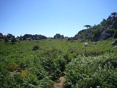 La plaine de fougères en montant à l'Omo di Cagna