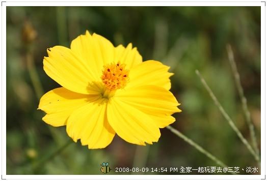 20080809三芝淡水全家遊 (2)