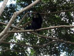 Singapore Zoo (Carla Renee) Tags: zoo singapore singaporezoo nightsafari