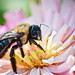 .Bumbly Bee Bokeh by *ojoyous1*