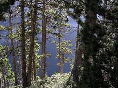 Ordesa 2 (Xevi V) Tags: trees woods pins arbres pines forests boscos pyrnes ordesa pirineus pinussylvestris valledeordesa parquenacionaldeordesaymonteperdido valldordesa pirineodehuesca pirineucentral pirineudosca pinedadepiroig parcnacionaldordesaimontperdut estatgesubalp