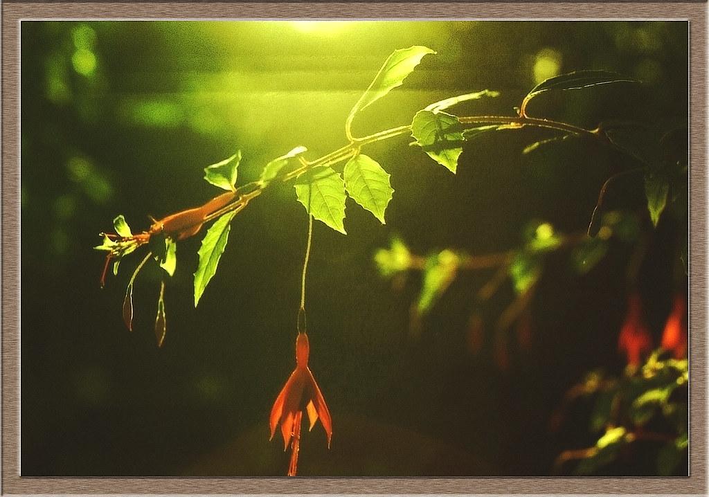 My Garden - Evening Light : Sigma Manual Focus Macro 50 mm F2.8 : Nikon FE Film Camera :