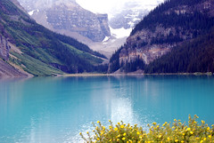 Canadian Rockies - Lake Louise (HBarrison) Tags: banff lakelouisebearcanadian rockies lakelouise harveybarrison travel travels worldtravel hbarrison alberta cans2s canada
