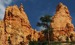 Navajo Loop - Bryce Canyon National Park (anadelmann) Tags: blue red orange usa white green rock canon landscape utah ut rocks amphitheatre canyon hike erosion hoodoo bryce brycecanyon hoodoos canonpowershot hikingtrail sunsetpoint brycecanyonnationalpark navajoloop v1000 g9 paunsauguntplateau brycecanyonnp notacanyon abigfave theunforgettablepictures canonpowershotg9 anadelmann f5099