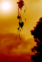 """The Only Hope for a Dying Heart."" (maraculio) Tags: leaves silhouette by fun him hope drive nikon heart inspired east only dying height pinoy marikina aplusphoto d40x maraculio kristianong"