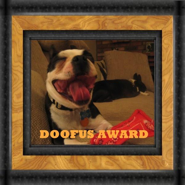 doofus award