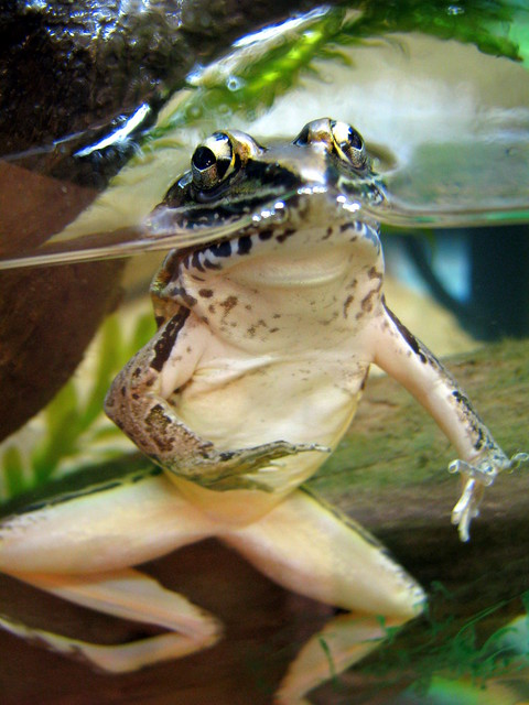 100 Things to see at the fair #41: Frog