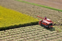 Rice rice baby (overoften) Tags: autumn fall japan miniature rice farm harvest fake shift  farmer tilt kumamoto kyushu   tiltshift   faketiltshift  fakeminiature