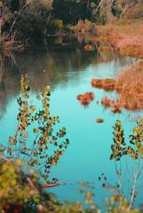 I colori dello stagno in autunno(The colors of the pond in the autumn) (fabry ... ) Tags: pond italia fabry stagno villapompeiana abigfave coloriautunno platinumphoto circolofotograficopaullese fabryfb coloursofautunm