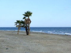 Plage sauvage (terpino) Tags: mer sable bleu plage vacance palmier dsert galet aplusphoto