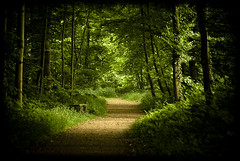 Pathway (manganite) Tags: park trees light summer plants green nature topf25 colors digital forest germany dark way geotagged spring google topf50 nikon colorful europe tl path atmosphere sunny onecolor d200 nikkor dslr vignette pathway brhl northrhinewestphalia thecolorgreen 18200mmf3556 utatafeature manganite nikonstunninggallery repost1 date:year=2008 date:month=may date:day=24 geo:lat=50821211 geo:lon=691179 format:ratio=32 repost2 repost3