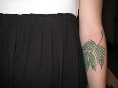 my forever fern