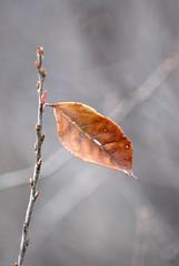 RCC_6161 (rchoephoto) Tags: autumn ontario canada nature leaf october 2008 teenranch lesamisdupetitprince