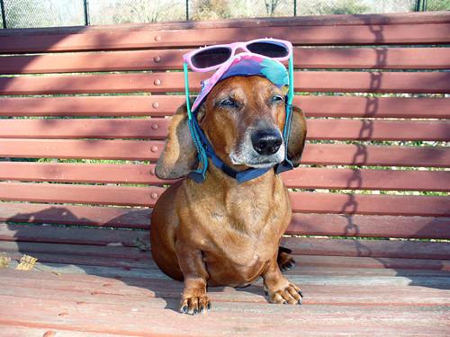 2008-10-28 - Ralphie the Tourist - 0003