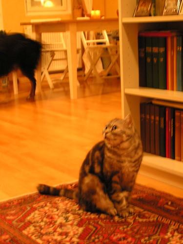 Kissa kääntää katseensa