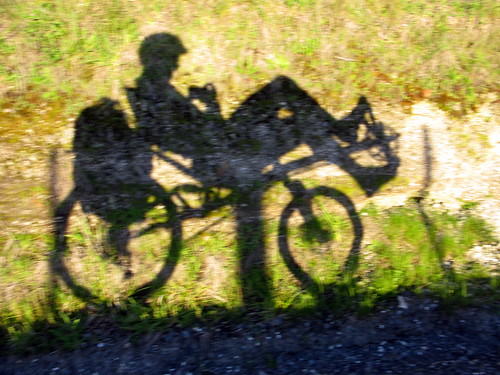 Recumbent shadows in the King Country, New Zealand