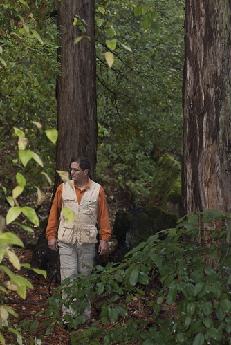 Further down is a stand of 500 year old redwoods. Andy was obviously dressed for safari.
