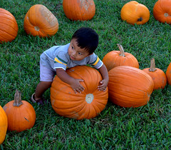 IMG_1866.CR2 (beachbumms2003) Tags: pumpkin child patch