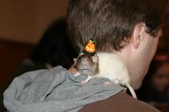 Halloween Rattie (Emily / DreamEyce) Tags: nov08 ratapalooza