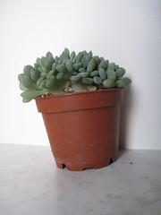 IMG_0140 (Plantules) Tags:
