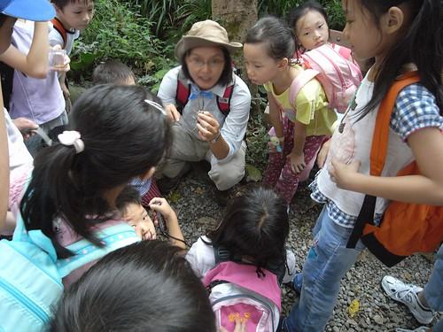 你拍攝的 27觀察攀木蜥蜴。