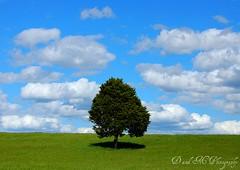 (Dallas and Mandi) Tags: usa tree clouds rural nikon indiana d40 treesubject