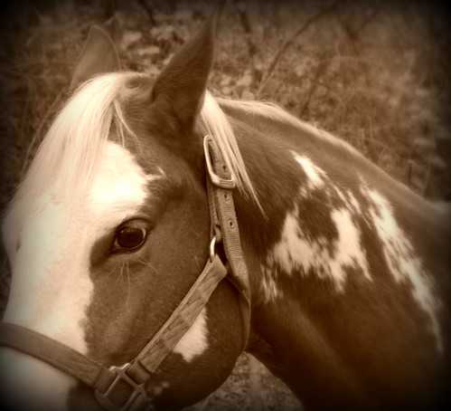 horse sepia
