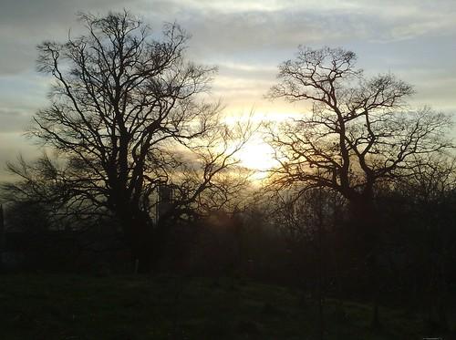 Lansdown Treetops