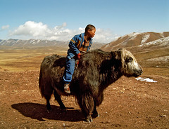 A Boy And A Yak (Explore(d) (Rosita So Image) Tags: china yak sky people cloud mountain animal children landscape tibet explore riding xiahe grassland ganjia