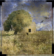 colore del grano/color of wheat (zunardu) Tags: door sky house reflection tree texture yellow nuvole giallo cielo finepix salento thebird coluds casolare olivetree sava grano olivo ulivo rondini frumento fujiflim zunardu magicunicornverybest