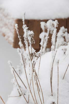 snow on chives