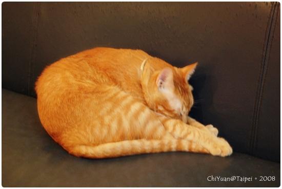 [台北]Cat。極簡咖啡-體操。睡姿