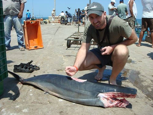 Ragge and the headless diamond shark...
