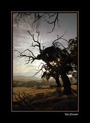 Early Morning Light Pyalong Victoria (RonShowler) Tags: landscape australianlandscape eucalypts earlymorninglight topshots bestofaustralia pyalong