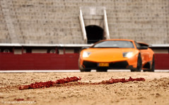 Dirt Cleans Off A Lot Better Than Blood (Thomas van Rooij) Tags: madrid las orange art cars field car photography march fight blood spain italian sand focus dof photoshoot thomas automotive super bull arena dirt exotic lance fighting bullfight lamborghini depth supercar sv bullfighting exotics supercars murcielago ventas fotoshoot plazadetoros veloce 2011 banderillas hypercar banderillos rooij superveloce lp6704 lp670 thomasvanrooij