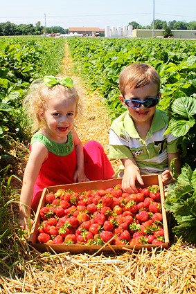 Nathan-and-Aut-strawberry-crate2