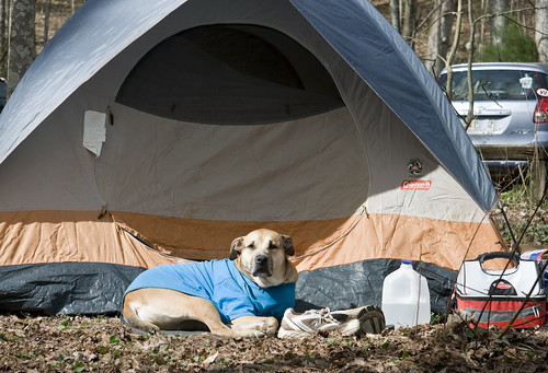 """Reese Protecting """"Her"""" Tent"""