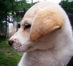 Emile4-I've Been Adopted! (chrissbp) Tags: dog 2008 emile shelteradopted2008