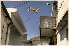Don't try this at home (hoofdweg) Tags: roof cat jump shot greece lucky crete hoofdweg bestofcats boc0708