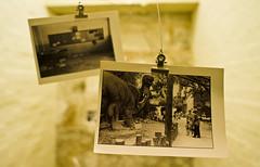 memories of a dinosaur (HKmPUA) Tags: architecture hongkong nikon dof dinosaur central 20mm d200 nikkor   biennale photoofaphoto urbanism policestation   f28 20mmf28d  20mmf28af refabricatingcity