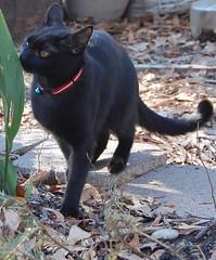 investigator (jennbennstar) Tags: our kitty beloved