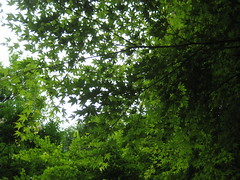 IMG_5318 (ukiecousin) Tags: park flowers trees summer building monument beer children julia roman ukraine celebration jasmin lvov oldbuilding tania foutain cherch stryiskipark balconyukraine